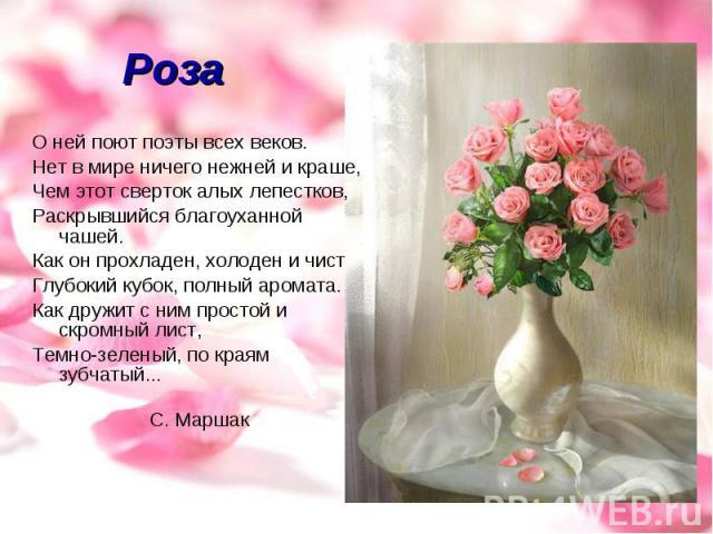Роза О ней поют поэты всех веков.Нет в мире ничего нежней и краше,Чем этот сверток алых лепестков,Раскрывшийся благоуханной чашей.Как он прохладен, холоден и чистГлубокий кубок, полный аромата.Как дружит с ним простой и скромный лист,Темно-зеленый, …