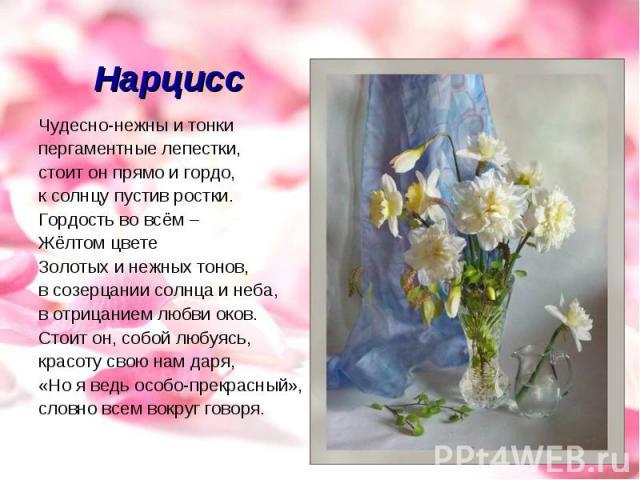 Нарцисс Чудесно-нежны и тонкипергаментные лепестки,стоит он прямо и гордо,к солнцу пустив ростки.Гордость во всём –Жёлтом цвете Золотых и нежных тонов,в созерцании солнца и неба, в отрицанием любви оков.Стоит он, собой любуясь,красоту свою нам даря,…