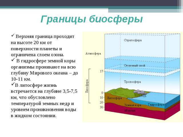 Границы биосферы Верхняя граница проходит на высоте 20 км от поверхности планеты и ограничена слоем озона. В гидросфере земной коры организмы проникают на всю глубину Мирового океана – до 10-11 км.В литосфере жизнь встречается на глубине 3,5-7,5 км,…