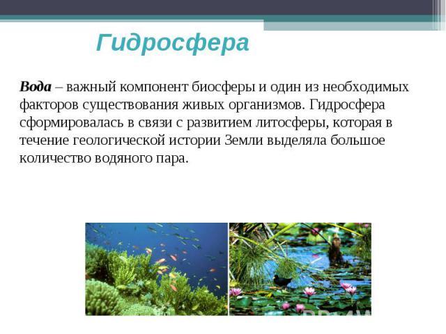 Гидросфера Вода – важный компонент биосферы и один из необходимых факторов существования живых организмов. Гидросфера сформировалась в связи с развитием литосферы, которая в течение геологической истории Земли выделяла большое количество водяного пара.