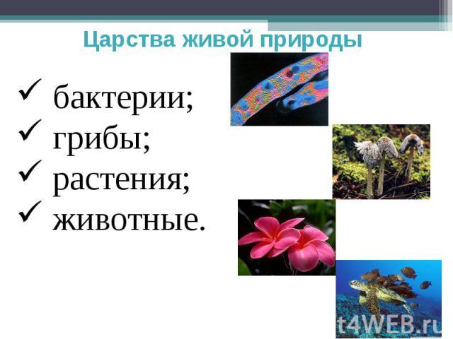 Царства живой природы бактерии; грибы; растения; животные.
