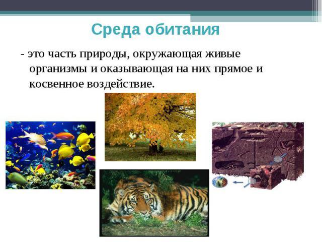 Среда обитания - это часть природы, окружающая живые организмы и оказывающая на них прямое и косвенное воздействие.