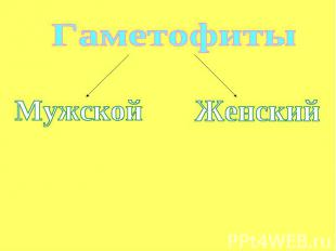Гаметофиты МужскойЖенский