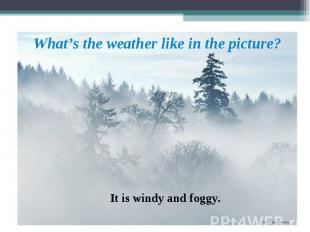 It is windy and foggy. What's the weather like in the picture?