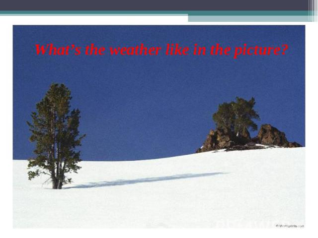 What's the weather like in the picture?