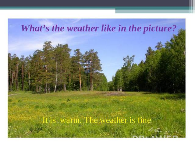 What's the weather like in the picture? It is warm. The weather is fine.