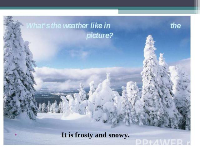It is frosty and snowy. What's the weather like in the picture?