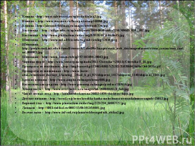 Клюква - http://www.talvisyarvi.ru/uploads/klukva2.jpgКлюква - http://www.murman.ru/flora/pictures/p100066.jpgКлюква - http://alexandrfridman.ru/images/treebush/226.jpgКостяника - http://nifiga-sebe.ru/uploads/posts/2009-06/thumbs/1246369605_024__09…
