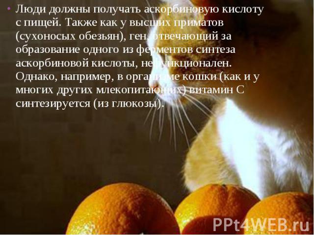 Люди должны получать аскорбиновую кислоту с пищей. Также как у высших приматов (сухоносых обезьян), ген, отвечающий за образование одного из ферментов синтеза аскорбиновой кислоты, нефункционален. Однако, например, в организме кошки (как и у многих …