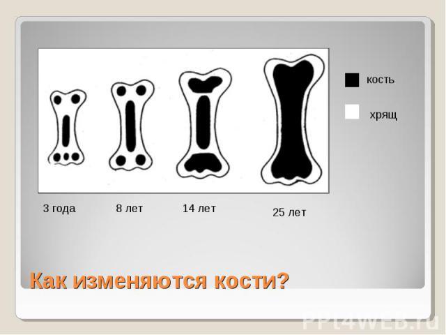 Как изменяются кости?