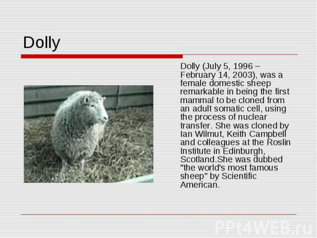 Dolly Dolly (July 5, 1996 – February 14, 2003), was a female domestic sheep remarkable in being the first mammal to be cloned from an adult somatic cell, using the process of nuclear transfer. She was cloned by Ian Wilmut, Keith Campbell and colleag…