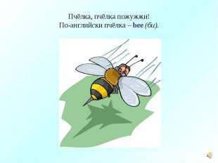 Пчёлка, пчёлка пожужжи!По-английски пчёлка – bee (би).