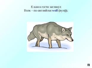 К нам в гости заглянулВолк – по-английски wolf (вулф).