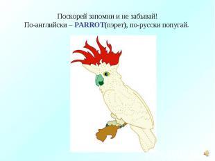 Поскорей запомни и не забывай!По-английски – PARROT(пэрет), по-русски попугай.