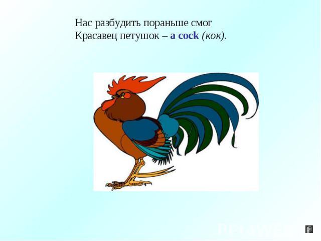 Нас разбудить пораньше смогКрасавец петушок – a cock (кок).
