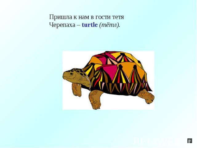 Пришла к нам в гости тетяЧерепаха – turtle (тётл).