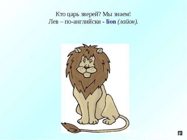 Кто царь зверей? Мы знаем!Лев – по-английски - lion (лайон).