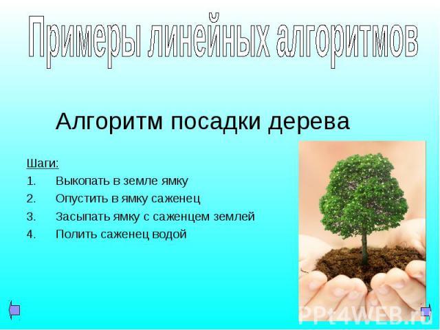 Алгоритм посадки дерева Шаги: Выкопать в земле ямку Опустить в ямку саженец Засыпать ямку с саженцем землей Полить саженец водой