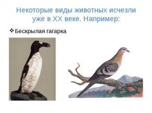 Некоторые виды животных исчезли уже в ХХ веке. Например: Бескрылая гагарка