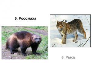 5. Росомаха