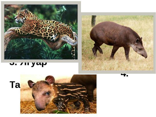 3. Ягуар 4. Тапир