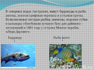 В северных водах Австралии, живут барракуды и рыбы ангелы, золотая грифовая чере