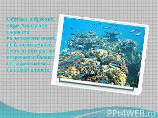 Обитают в пресных водах Австралии около ста восьмидесяти видов рыб, значительная