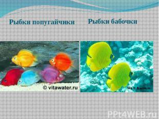Рыбки бабочки Рыбки бабочки