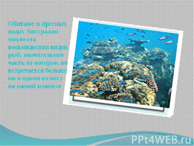 Обитают в пресных водах Австралии около ста восьмидесяти видов рыб, значительная часть из которых не встречается больше ни в одном из мест на нашей планете. Обитают в пресных водах Австралии около ста восьмидесяти видов рыб, значительная часть из ко…