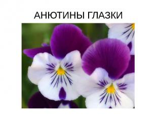 АНЮТИНЫ ГЛАЗКИ