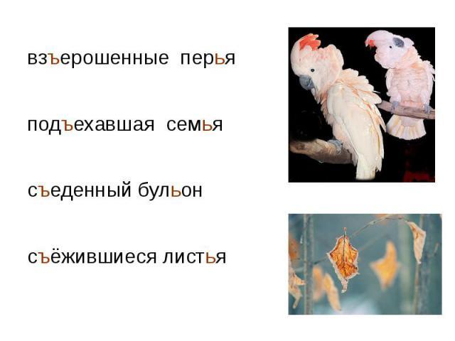 взъерошенные перья взъерошенные перья подъехавшая семья съеденный бульон съёжившиеся листья