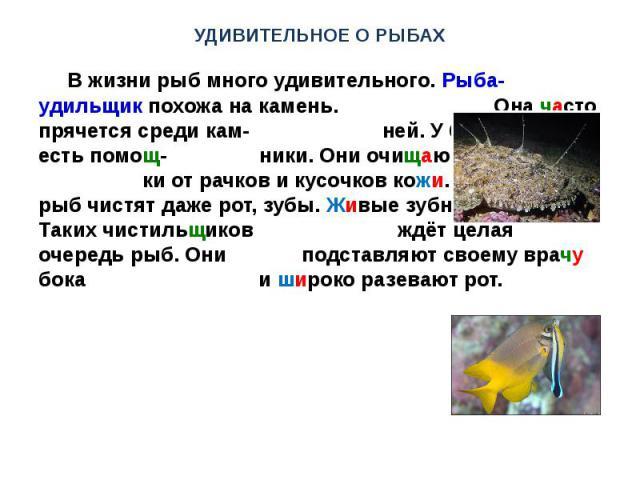 УДИВИТЕЛЬНОЕ О РЫБАХ В жизни рыб много удивительного. Рыба-удильщик похожа на камень. Она часто прячется среди кам- ней. У больших рыб есть помощ- ники. Они очищают их плавни- ки от рачков и кусочков кожи. У больших рыб чистят даже рот, зубы. Живые …