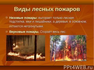 Низовые пожары: выгорает только лесная подстилка, мхи и лишайники, а деревья, в