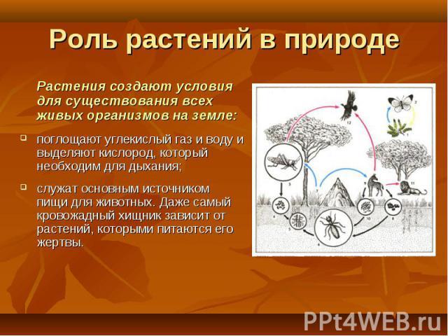 Растения создают условия для существования всех живых организмов на земле: Растения создают условия для существования всех живых организмов на земле: поглощают углекислый газ и воду и выделяют кислород, который необходим для дыхания; служат основным…