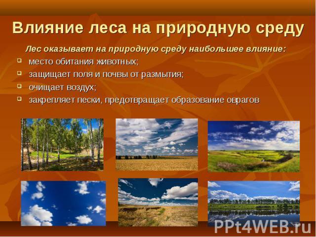 Лес оказывает на природную среду наибольшее влияние: Лес оказывает на природную среду наибольшее влияние: место обитания животных; защищает поля и почвы от размытия; очищает воздух; закрепляет пески, предотвращает образование оврагов