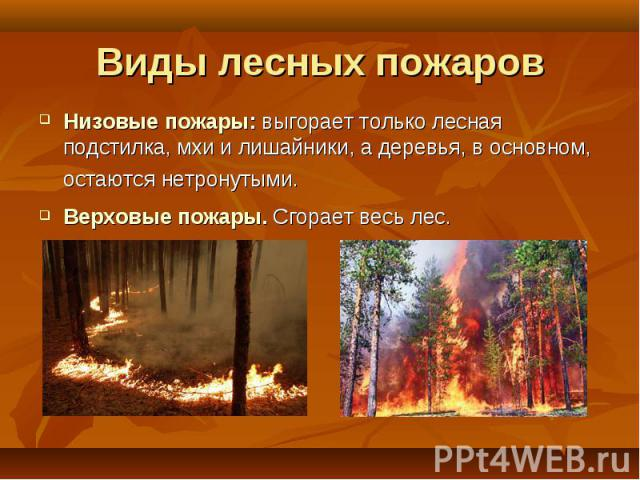 Низовые пожары: выгорает только лесная подстилка, мхи и лишайники, а деревья, в основном, остаются нетронутыми. Низовые пожары: выгорает только лесная подстилка, мхи и лишайники, а деревья, в основном, остаются нетронутыми. Верховые пожары. Сгорает …