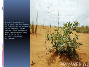 Растительность скудная, господствуют субтропические пустыни с полынно-солянковой