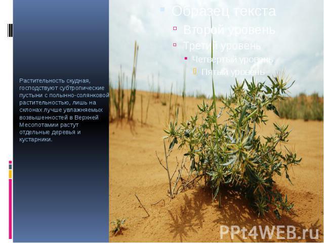 Растительность скудная, господствуют субтропические пустыни с полынно-солянковой растительностью, лишь на склонах лучше увлажняемых возвышенностей в Верхней Месопотамии растут отдельные деревья и кустарники. Растительность скудная, господствуют субт…