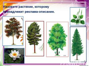 Назовите растение, которому Назовите растение, которому принадлежит реклама-опис