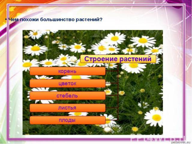 Чем похожи большинство растений? Чем похожи большинство растений?