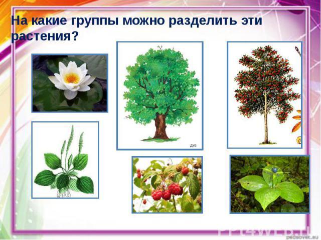 На какие группы можно разделить эти растения? На какие группы можно разделить эти растения?