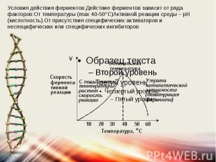 Условия действия ферментов Действие ферментов зависит от ряда факторов:От темпер
