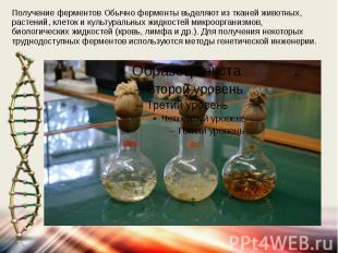Получение ферментов Обычно ферменты вьделяют из тканей животных, растений, клето