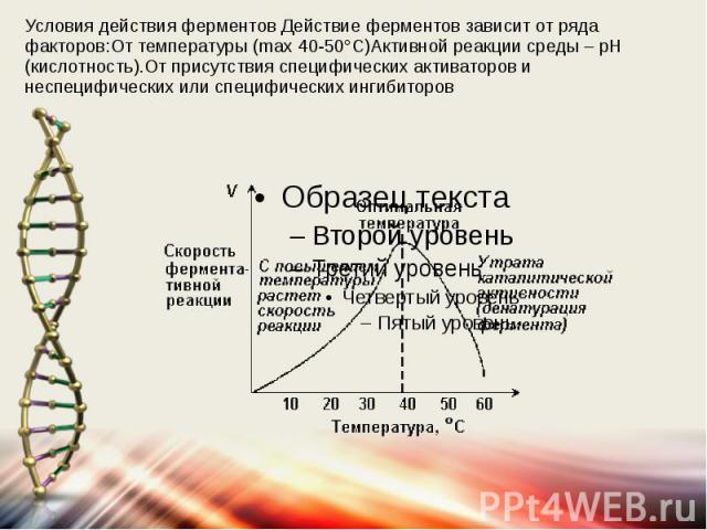 Условия действия ферментов Действие ферментов зависит от ряда факторов:От температуры (max 40-50°С)Активной реакции среды – pH (кислотность).От присутствия специфических активаторов и неспецифических или специфических ингибиторов