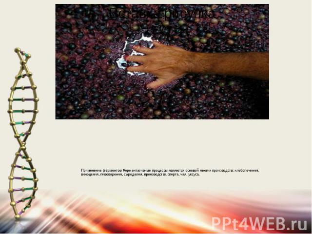 Применение ферментов Ферментативные процессы являются основой многих производств: хлебопечения, виноделия, пивоварения, сыроделия, производства спирта, чая, уксуса.