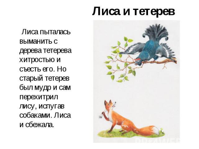 Лиса и тетерев Лиса пыталась выманить с дерева тетерева хитростью и съесть его. Но старый тетерев был мудр и сам перехитрил лису, испугав собаками. Лиса и сбежала.