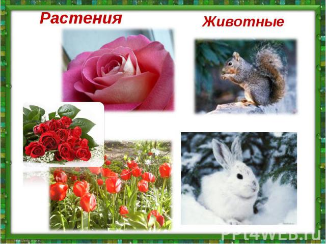 РастенияРастения