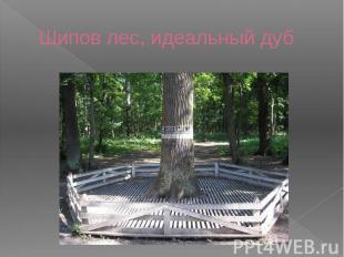 Шипов лес, идеальный дуб