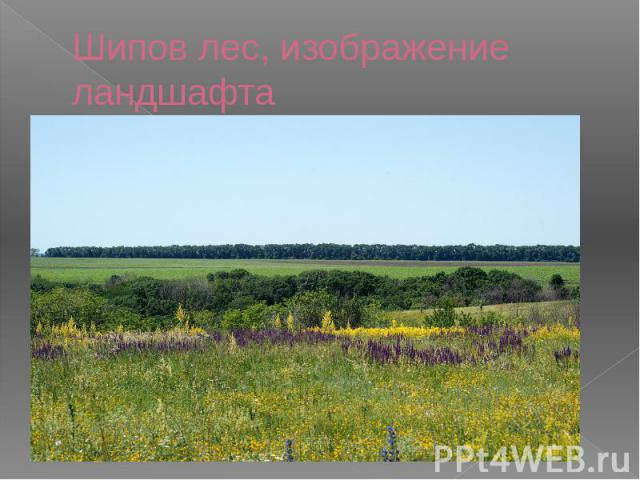 Шипов лес, изображение ландшафта