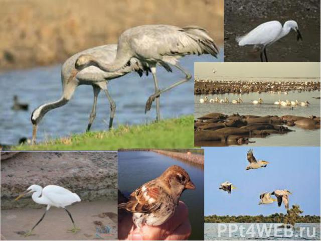 Фото птахів